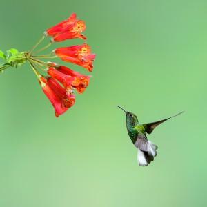 Hummingbird y el futuro del SEO